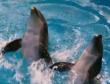 Delfines kaland (film)