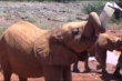 Elefántóvoda