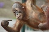 Csodálatos állatvilág - Majomparádé