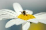 Miért fontosak a méhek?
