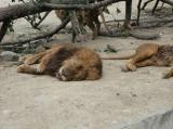 A pécsi állatkert