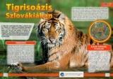 A szibériai tigris