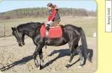 Az ezerarcú lovassport